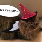 ハロウインコスプレした猫