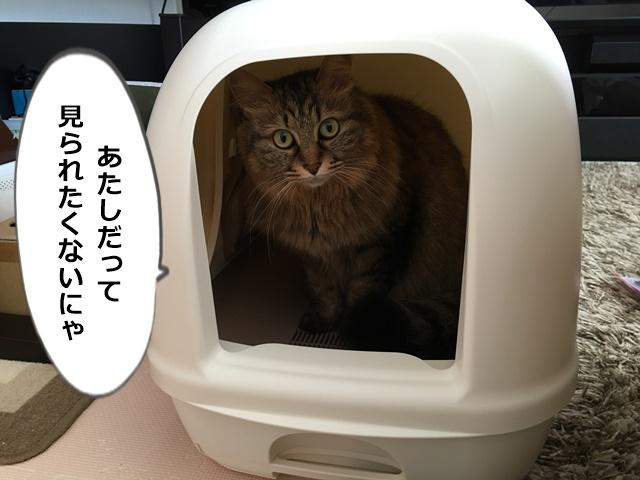 デオトイレの中からこちらを見る猫