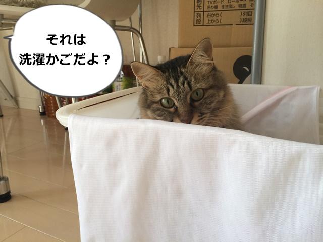 洗濯かごに入った猫