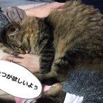 腕だっこする猫