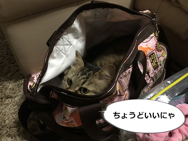 旅行バッグに入った猫
