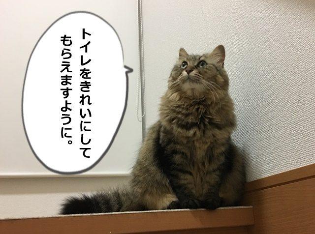 願い事を思う猫