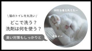 猫トイレを丸洗い