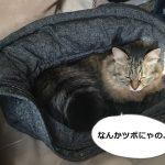 ダウンジャケットにもぐる猫