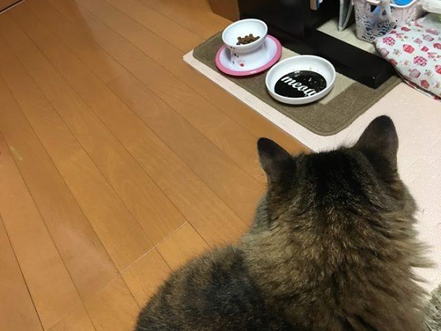 食器を遠目にみる猫
