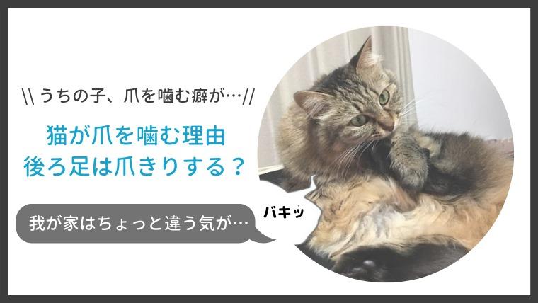 猫が後ろ足の爪を噛む、引っ張る理由!爪切りの必要は?