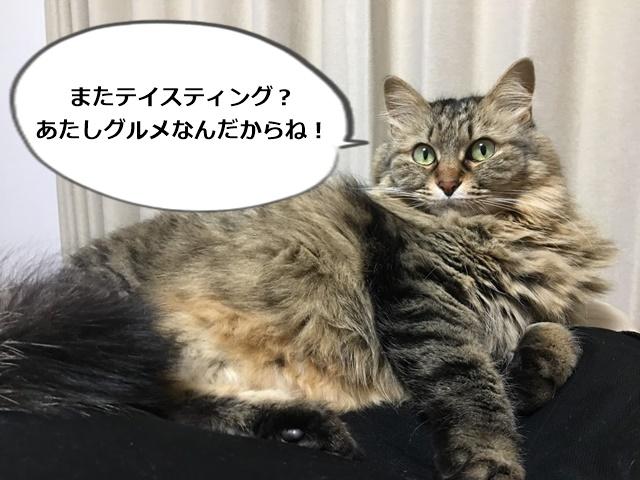 ちょっと不満がある猫