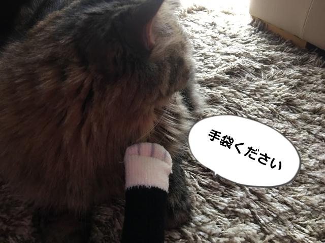 猫に手袋をせがんでみる
