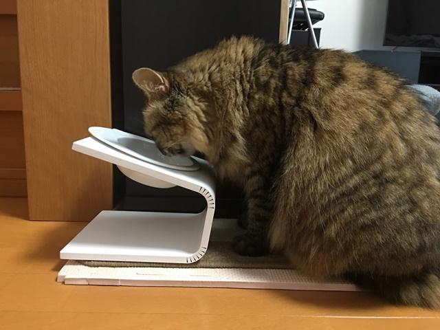 キートの食器台でごはんを食べる猫