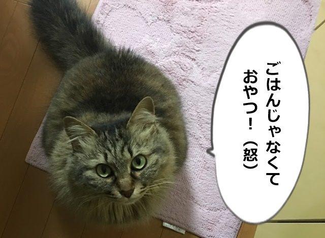 不満を訴える猫