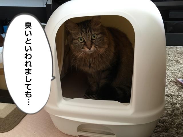 トイレ内からこちらを見る猫