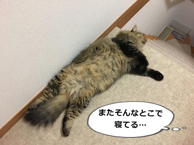 階段上で寝る猫