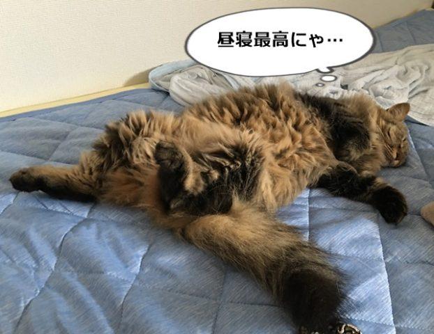 Nクールマットの上で昼寝する猫