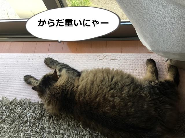 ヤル気でない猫
