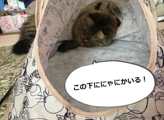 キャットテントで遊ぶ猫