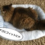 Nクールのベッドを使う猫