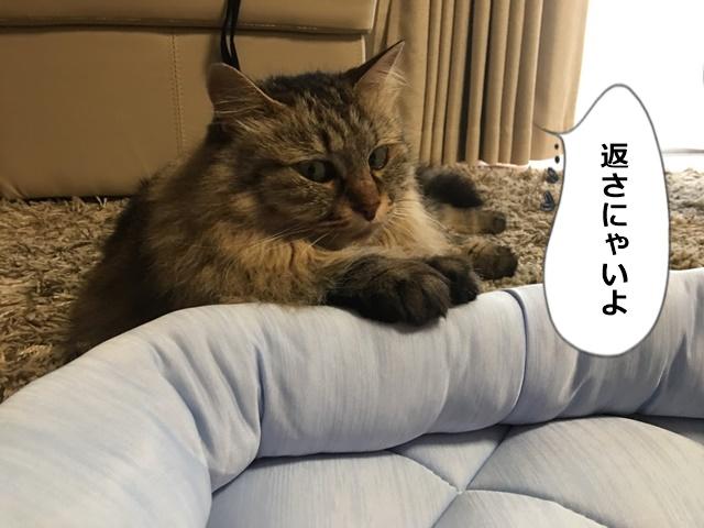 Nクールベッドを返さない猫