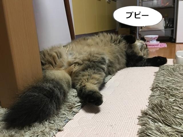 仰向けで寝る猫