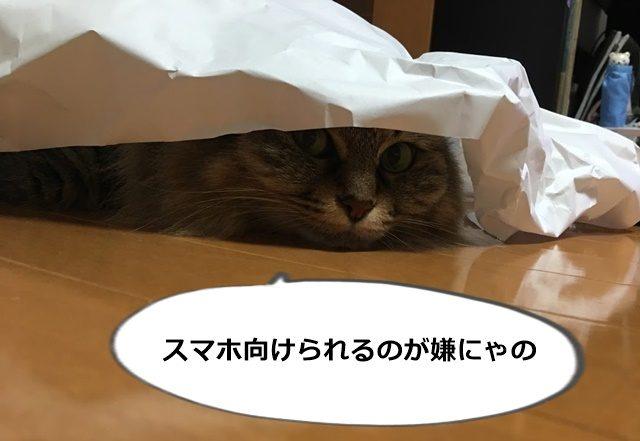 カメラを避ける猫