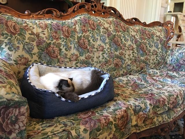 ソファの上のベッドで眠る猫