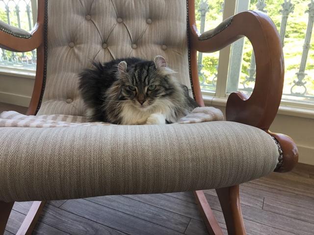 ロッキングチェアに座る猫