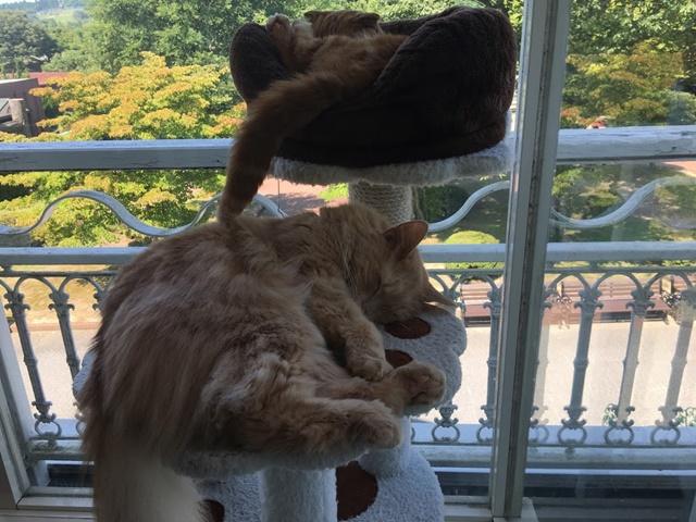 テラスのキャットタワーで昼寝する猫