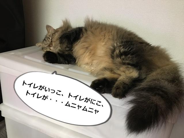 寝落ちする猫