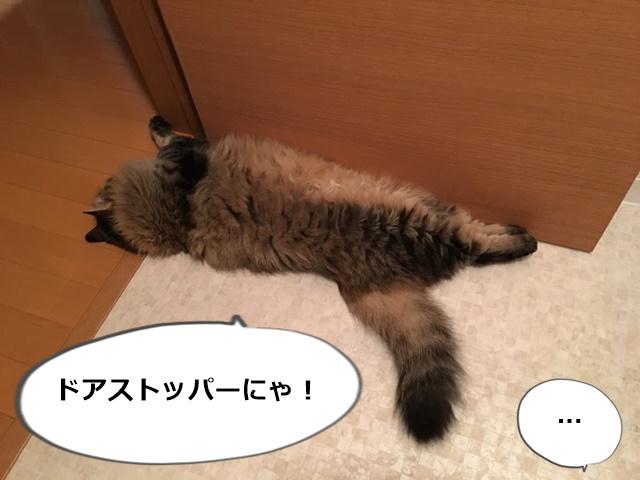 ドアを押さえる猫
