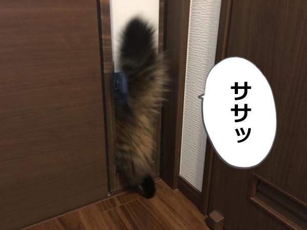 ペットドアを通りぬける猫