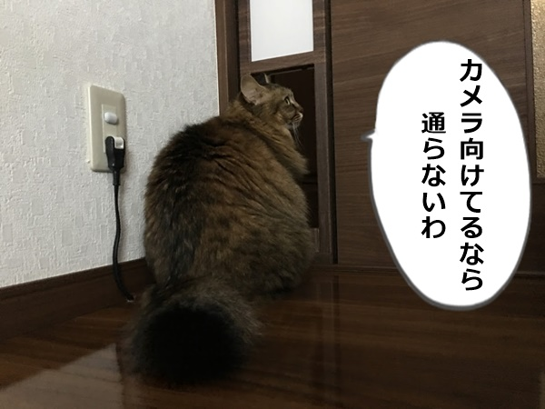 ペットドアを通るのをためらう猫