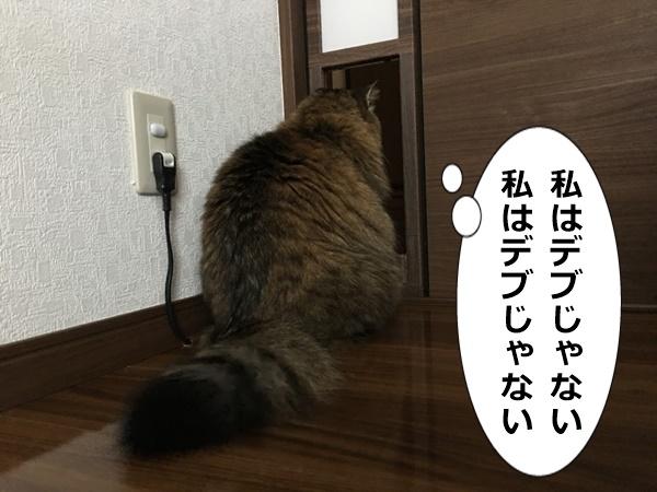 ペットドアの前でとまる猫
