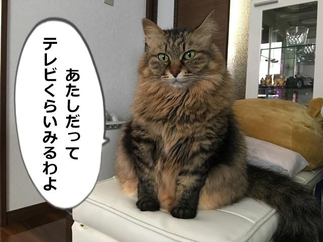 猫もテレビをみるそうです