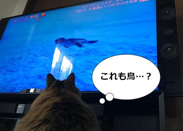 テレビに映るウミガメを見る猫