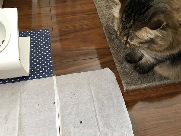 ごはんを食べる猫がとばすつば