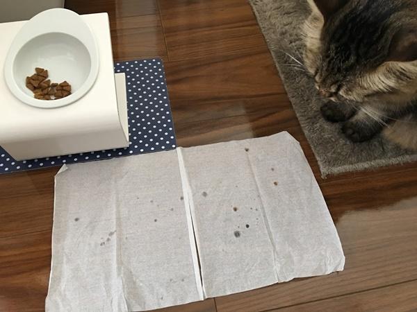 ごはんを食べる猫がとばすツバ