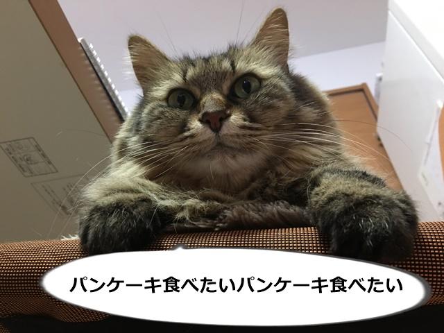 上から目線の猫