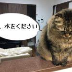 水を催促する猫
