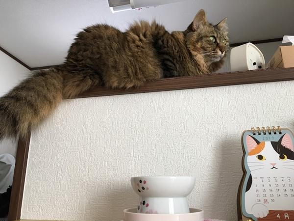 水飲み場を無視する猫
