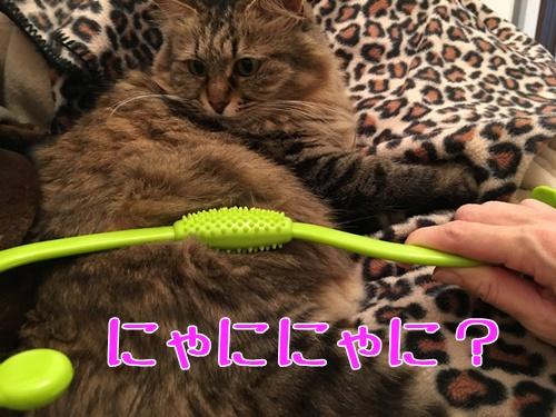 マッサージグッズと猫