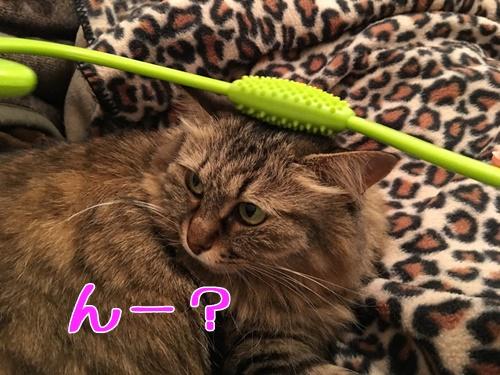 猫とマッサージグッズ