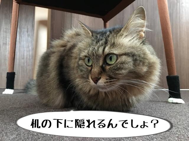 椅子の下に逃げた猫