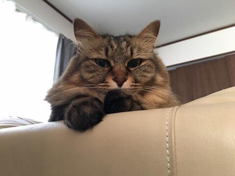 何かいいたげな猫
