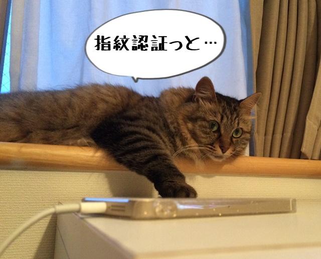 スマホに触る猫