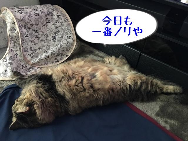 洗濯物の上に寝転ぶ猫