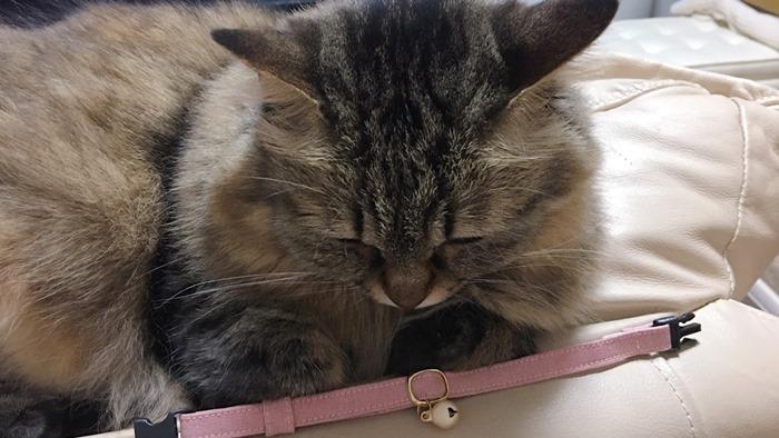 猫の首輪を付ける流れ