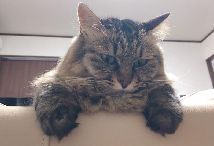 首輪が隠れて見えない猫