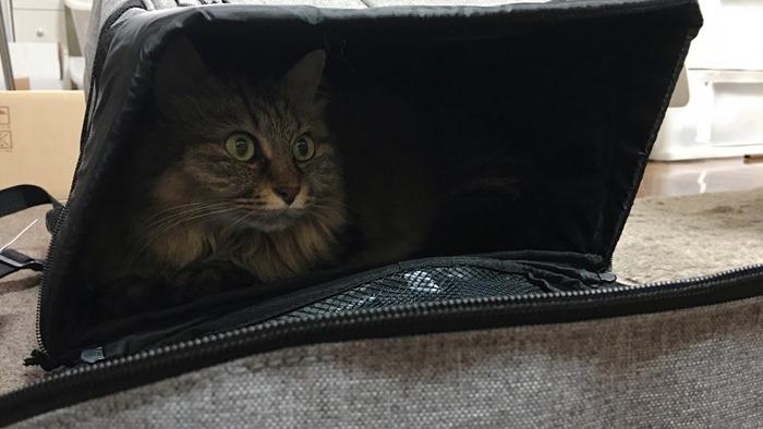猫用リュック型キャリーバッグLiscio(リシオ)の口コミ
