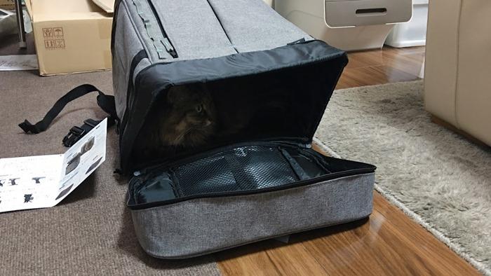 猫用リュック型キャリーバッグLiscio(リシオ)に入る猫
