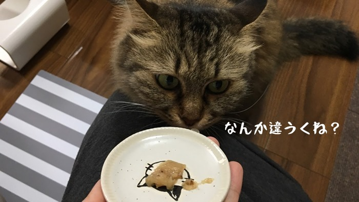 ナチュラルキッスを実食する猫