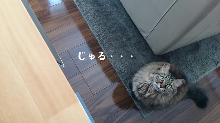 モグリッチを待つ猫